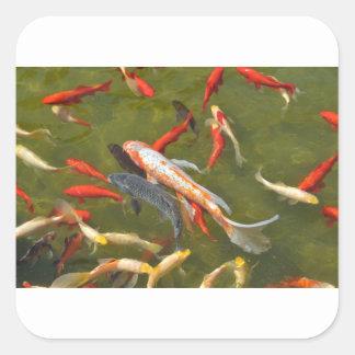 Koi carps in pond square sticker