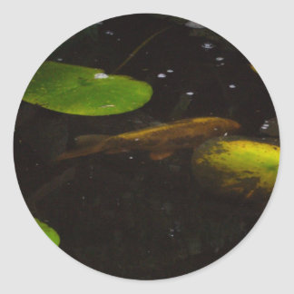 Koi Fish in a Lily Pond Round Stickers