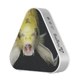 Koi Fish in Japan