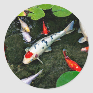 Koi Pond Round Sticker