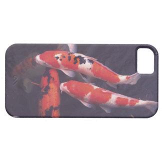 Koi swimming in pool iPhone 5 covers
