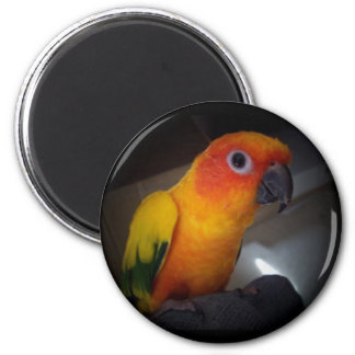 kojo the sun conure - Customized 6 Cm Round Magnet