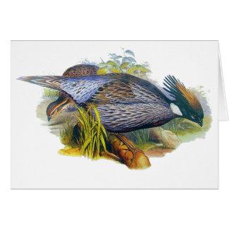 Koklass Pheasant Card