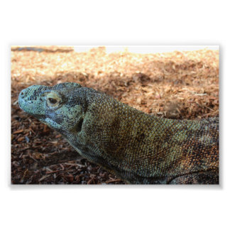 Komodo Dragon Just Chilling! Photo Print