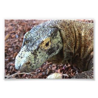 Komodo Dragon Photo Print