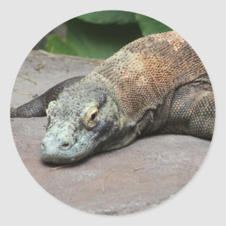 Komodo dragon (Varanus komodoensis), Classic Round Sticker