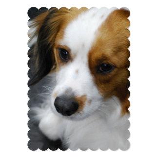 Kooikerhondje Puppy Card