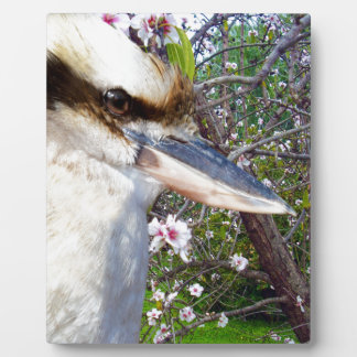 Kookaburra Beside Blossom Tree, Plaque