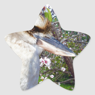 Kookaburra By A Blossom Tree, Star Sticker