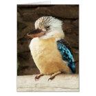 Kookaburra Card