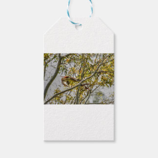 KOOKABURRA IN FLIGHT AUSTRALIA ART EFFECTS GIFT TAGS