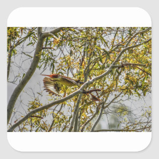 KOOKABURRA IN FLIGHT AUSTRALIA ART EFFECTS SQUARE STICKER