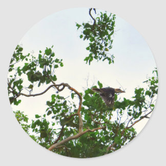 KOOKABURRA IN FLIGHT QUEENSLAND AUSTRALIA CLASSIC ROUND STICKER