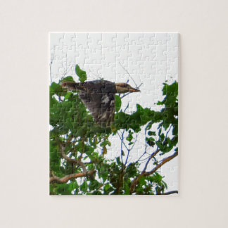 KOOKABURRA IN FLIGHT QUEENSLAND AUSTRALIA JIGSAW PUZZLE