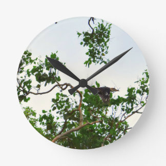 KOOKABURRA IN FLIGHT QUEENSLAND AUSTRALIA ROUND CLOCK