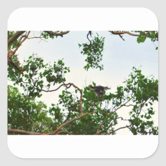 KOOKABURRA IN FLIGHT QUEENSLAND AUSTRALIA SQUARE STICKER
