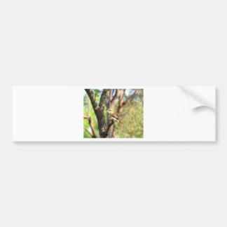 KOOKABURRA IN TREE QUEENSLAND AUSTRALIA BUMPER STICKER