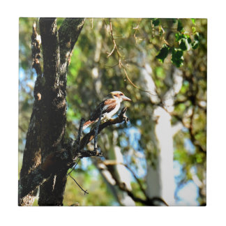 KOOKABURRA IN TREE QUEENSLAND AUSTRALIA CERAMIC TILE