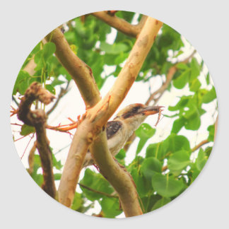 KOOKABURRA IN TREE QUEENSLAND AUSTRALIA CLASSIC ROUND STICKER