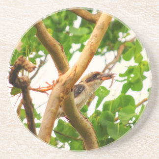 KOOKABURRA IN TREE QUEENSLAND AUSTRALIA COASTER
