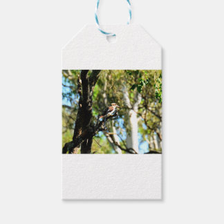 KOOKABURRA IN TREE QUEENSLAND AUSTRALIA GIFT TAGS