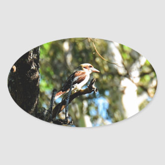 KOOKABURRA IN TREE QUEENSLAND AUSTRALIA OVAL STICKER