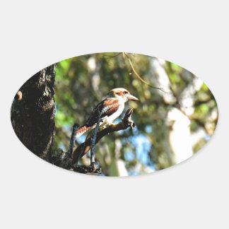 KOOKABURRA IN TREE QUEENSLAND AUSTRALIA OVAL STICKER