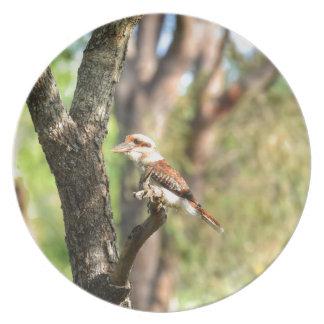 KOOKABURRA IN TREE QUEENSLAND AUSTRALIA PLATE