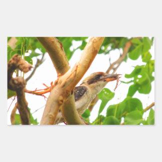 KOOKABURRA IN TREE QUEENSLAND AUSTRALIA RECTANGULAR STICKER