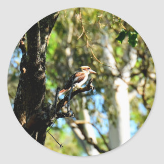 KOOKABURRA IN TREE QUEENSLAND AUSTRALIA ROUND STICKER
