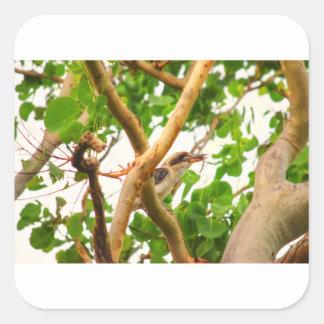 KOOKABURRA IN TREE QUEENSLAND AUSTRALIA SQUARE STICKER