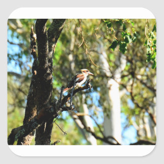 KOOKABURRA IN TREE QUEENSLAND AUSTRALIA SQUARE STICKER