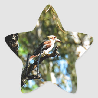 KOOKABURRA IN TREE QUEENSLAND AUSTRALIA STAR STICKER