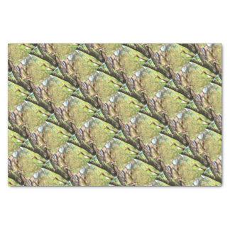 KOOKABURRA IN TREE QUEENSLAND AUSTRALIA TISSUE PAPER