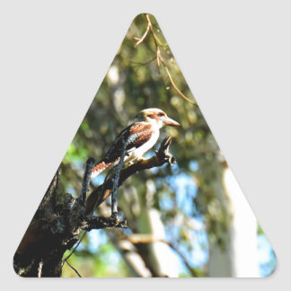 KOOKABURRA IN TREE QUEENSLAND AUSTRALIA TRIANGLE STICKER