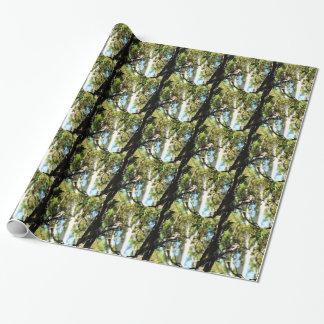KOOKABURRA IN TREE QUEENSLAND AUSTRALIA WRAPPING PAPER