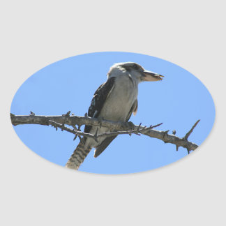 Kookaburra Oval Sticker