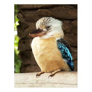 Kookaburra Postcards