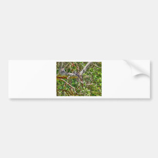 KOOKABURRA QUEENSLAND AUSTRALIA ART EFFECTS BUMPER STICKER