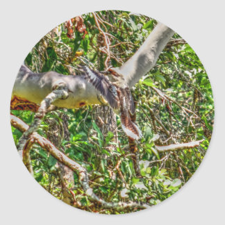 KOOKABURRA QUEENSLAND AUSTRALIA ART EFFECTS CLASSIC ROUND STICKER