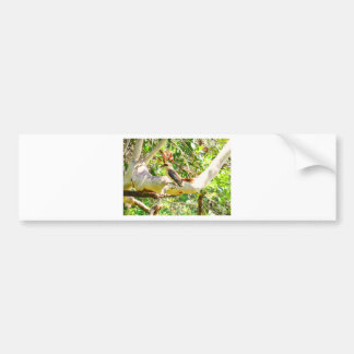 KOOKABURRA QUEENSLAND AUSTRALIA BUMPER STICKER