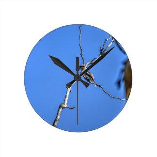 KOOKABURRA QUEENSLAND AUSTRALIA WITH ART EFFECTS CLOCK