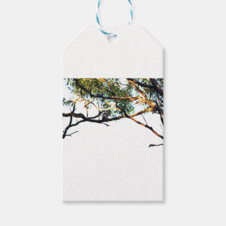 KOOKABURRA RURAL QUEENSLAND AUSTRALIA GIFT TAGS