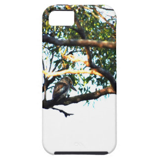 KOOKABURRA RURAL QUEENSLAND AUSTRALIA iPhone 5 CASES