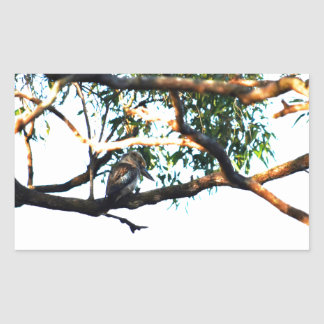 KOOKABURRA RURAL QUEENSLAND AUSTRALIA RECTANGULAR STICKER