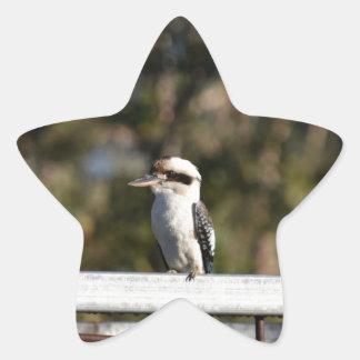 KOOKABURRA RURAL QUEENSLAND AUSTRALIA STAR STICKER