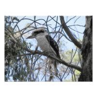 Kookaburra Sits In The Old Gum Tree Photograph