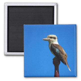 kookaburra square magnet