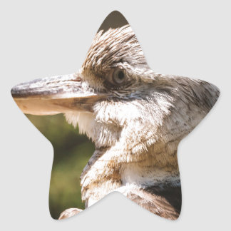 Kookaburra Star Sticker