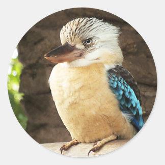 Kookaburra Round Sticker